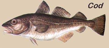 Peixe Cod